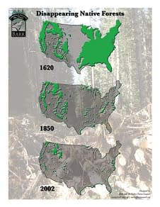 Disappearing Native Forests Map designed by Peter Chordas
