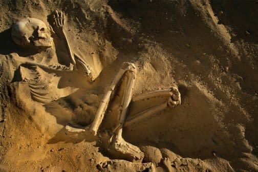 human fossils